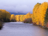 Yakima River and Trees in Autumn, Near Cle Elum, Kittitas County, Washington, USA Photographic Print by Jamie & Judy Wild