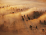Pine Forest in Morning Fog, Minnesota, USA Photographic Print by Richard Hamilton Smith