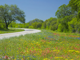 Curve in Roadway with Wildflowers Near Gonzales, Texas, USA Stampa fotografica di Gulin, Darrell