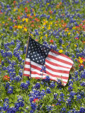 American Flag in Field of Blue Bonnets, Paintbrush, Texas Hill Country, USA Photographic Print by Darrell Gulin