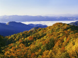 Forest in Autumn Color from Shot Beech Ridge, Great Smoky Mountains National Park, North Carolina Photographic Print by Dennis Flaherty