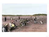 Cranberry Bog Pickers at Work on Cape Cod, Massachusetts, c.1890 Stampa giclée