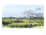 Harvesting a Carolina Rice-Field Giclee Print