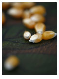 Kernels Close up I Prints by Nicole Katano