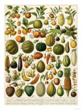 Tropical Fruits Giclee Print