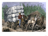 African-American Hauling Baled Cotton to Market with a Team of Mules, c.1800 Giclee Print
