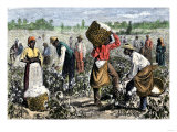 African-American Slaves Picking Cotton Lámina giclée
