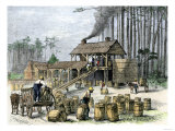 Turpentine Distillery in North Carolina, c.1870 Giclee Print