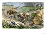 Bringing Tobacco to Market in Early Virginia Giclee Print