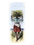 African-American Woman Carrying Sheaves on a Rice Plantation Giclee Print