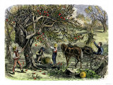 Picking Apples, a Farm Scene Near Pride's Bridge, Maine, c.1800 Giclee Print
