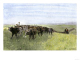 Cowboys Driving a Longhorn Herd on the Great Cattle Trail 1800 Giclee Print