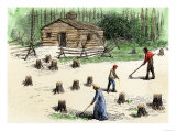 Pioneers Planting Corn on Newly Cleared Land in the Backwoods Premium Giclee Print