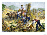 American Farm Family Gathering Pumpkins and Husking Maize, c.1800 Giclee Print