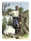African-American Slave with Bag of Picked Cotton, c.1800 Giclee Print