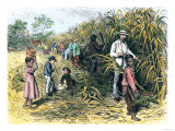 White Overseer with African-American Field-Hands Cutting Sugar-Cane, c.1800 Giclee Print