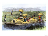 African-American Slaves Unloading Rice Barges in South Carolina 1800 Giclee Print