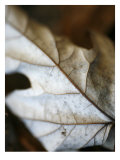Fallen Leaves I Poster by Nicole Katano