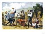 Gathering Pumpkins, an October Scene in New England, c.1860 Giclee Print