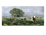 African-Americans Cutting Rice in Louisiana, Supervised by an Overseer on Horseback Giclee Print