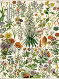 Perennial Garden Flowers, Aster, Daisy, Bleeding Heart, Geranium, Primrose, Phlox Giclee Print