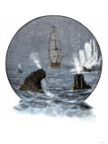 Walrus in Arctic Waters Near a Tall Sailing Ship Giclee Print