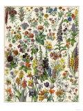 Garden Flowers, Lily, Daffodil, Tulip, Dahlia, Zinnia, Pansy, Marigold Reproduction procédé giclée