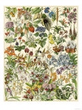 Tropical and Exotic Flowers, Including Orchid, Anthurium, Gloxinia, Trillium Giclée-Druck