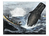 Whale Struck by a Harpoon While Breaching, c.1800 Giclee Print