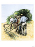 African American Field Hands Hooking Up Sugar Cane in Louisiana, c.1800 Giclee Print