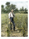 Farmer in His Cornfield Praying for Rain, c.1800 Giclee Print