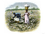 Picking Cotton on a Plantation in the Deep South, c.1800 Giclee Print