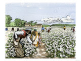 African-American Field-Hands Picking Cotton Giclee Print