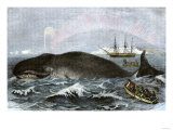 Longboat Crew Attacking a Whale with Hand Harpoons in the Arctic, c.1800 Premium Giclee Print
