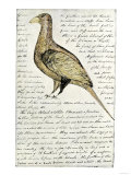 Sketch by William Clark of Cock of the Plains in the Lewis and Clark Expedition Diary Giclée-tryk