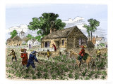 Cultivation of Tobacco in Colonial Virginia Giclee Print