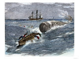 Angry Whale Chasing a Harpoon Boat Giclee Print