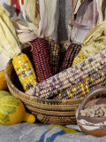 Squash, Corn, and Beans: the Three Sisters of Native American Agriculture Photographic Print