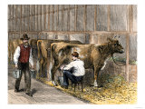 Milking-Time in a Dairy Barn, c.1870 Giclee Print