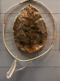 Beaver Pelt Stretched on a Sapling Frame and Laced with Rawhide Photographie