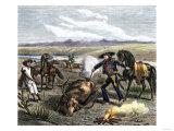 Vaquero Branding Longhorn Cattle, c.1800, Giclee Print
