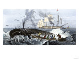 Long Boat Crew Harpooning a Whale Giclee Print