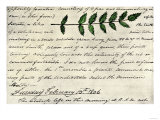 William Clark's Sketch of an Evergreen Shrub Leaf in the Lewis and Clark Expedition Diary, c.1806 Premium Giclee Print