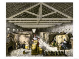 Farm Women Pouring Milk Into a Churn in Dairy Barn Lámina giclée