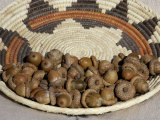 Acorns in a Native American Basket Photographic Print