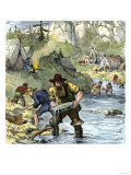 Prospectors Panning for Gold in the California Gold Rush Giclee Print