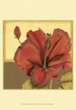 Cropped Sophisticated Hibiscus IV Prints by Jennifer Goldberger