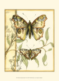 Tandem Butterflies I Print by Jennifer Goldberger