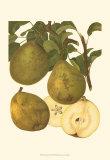 Pear Varieties I Print