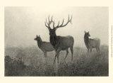 American Elk Posters by R. Hinshelwood